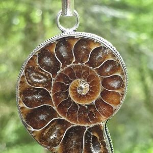 Ammonite fossilisée ou opalisée sur branche d'arbre, plaqué argent