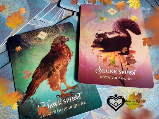 Cartes oracles tirées du Spirit Animal Oracle de Colette Baron-Reid. Esprit animal guide du faucon.